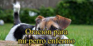 Oración Para Mi Perro Enfermo
